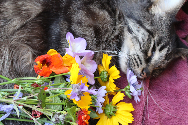 650 Mai Mai with flowers