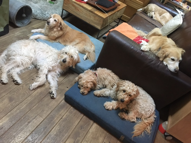 Relaxing dogs