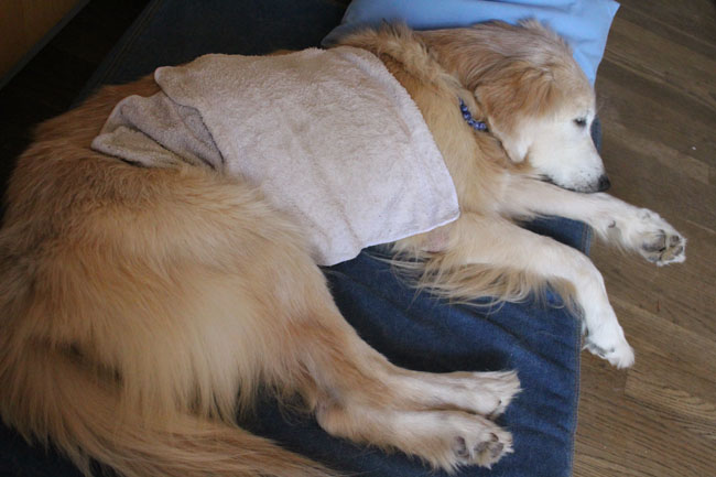 Kula had fever (covering cold towels)