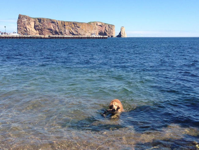 650 Luka swimming Percé Rock
