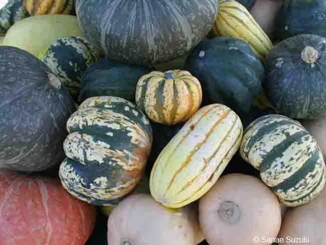 650-many-pumpkins-cr