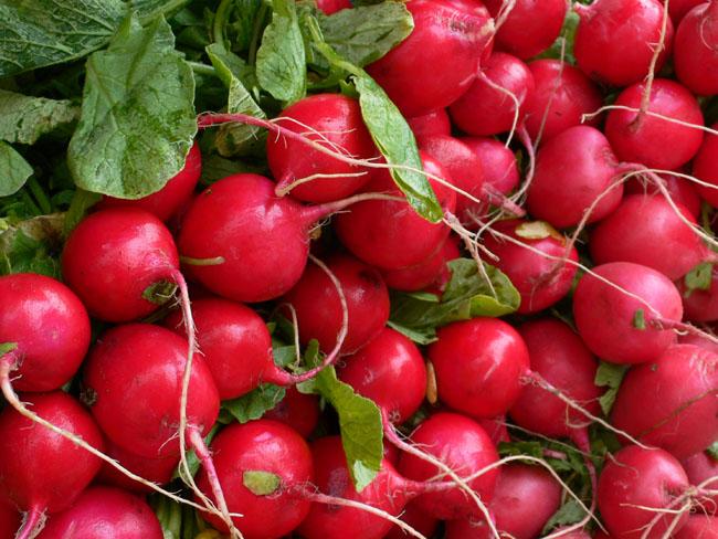 650 Red radish