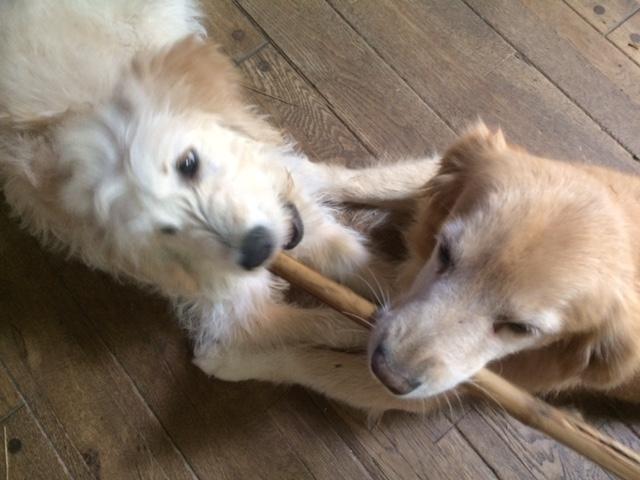 Nalu & Lumi with bamboo