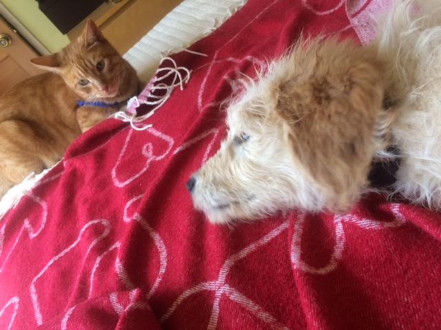Nalu with Tin Tin on bed