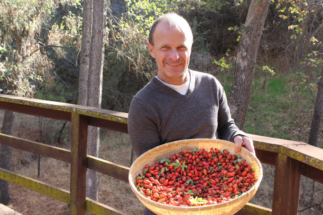 650 Rosehips with Eric 2000